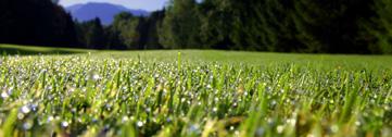 grass_wet